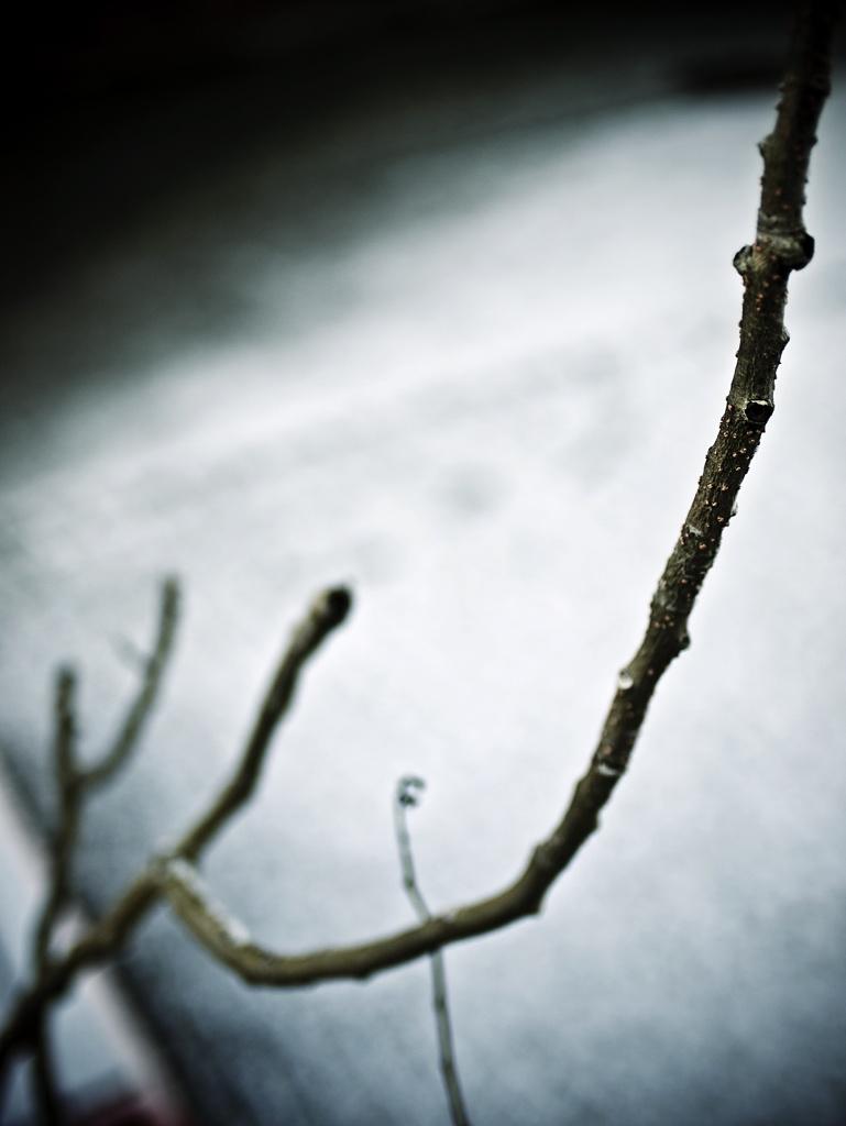 vinteren-3.jpg